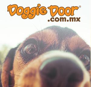 Doogie Door